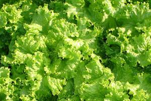 Produtos Orgânicos: Benefícios para sua saúde e para o Planeta